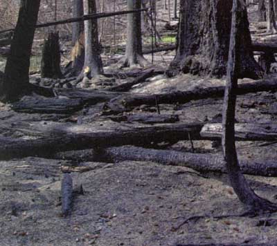 Forest Fire in the Northern Rockies U.S. - Soils - Direct ...